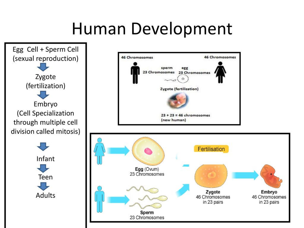 Reproductive And Development