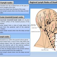 Diagram Lymph Nodes On Back Of Head Ford Escort Wiring The And Neck Ppt Download