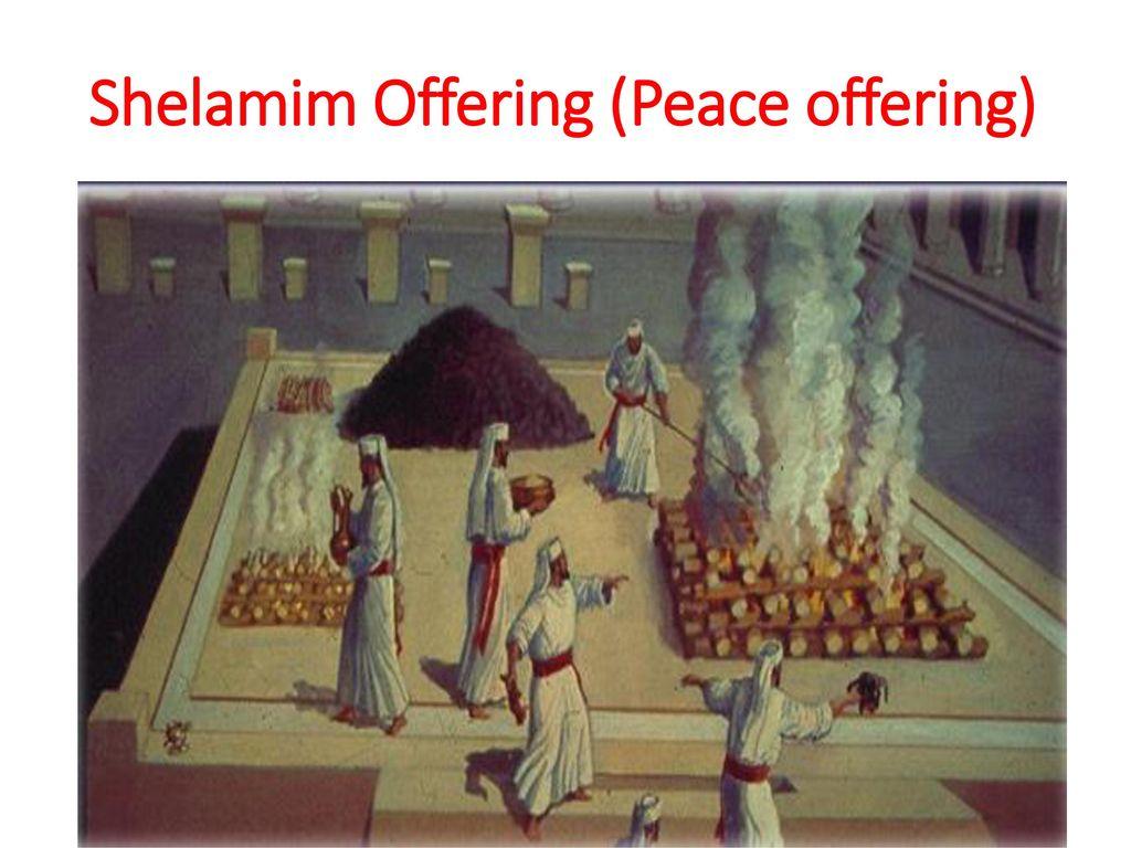 Image result for shelamim offering images