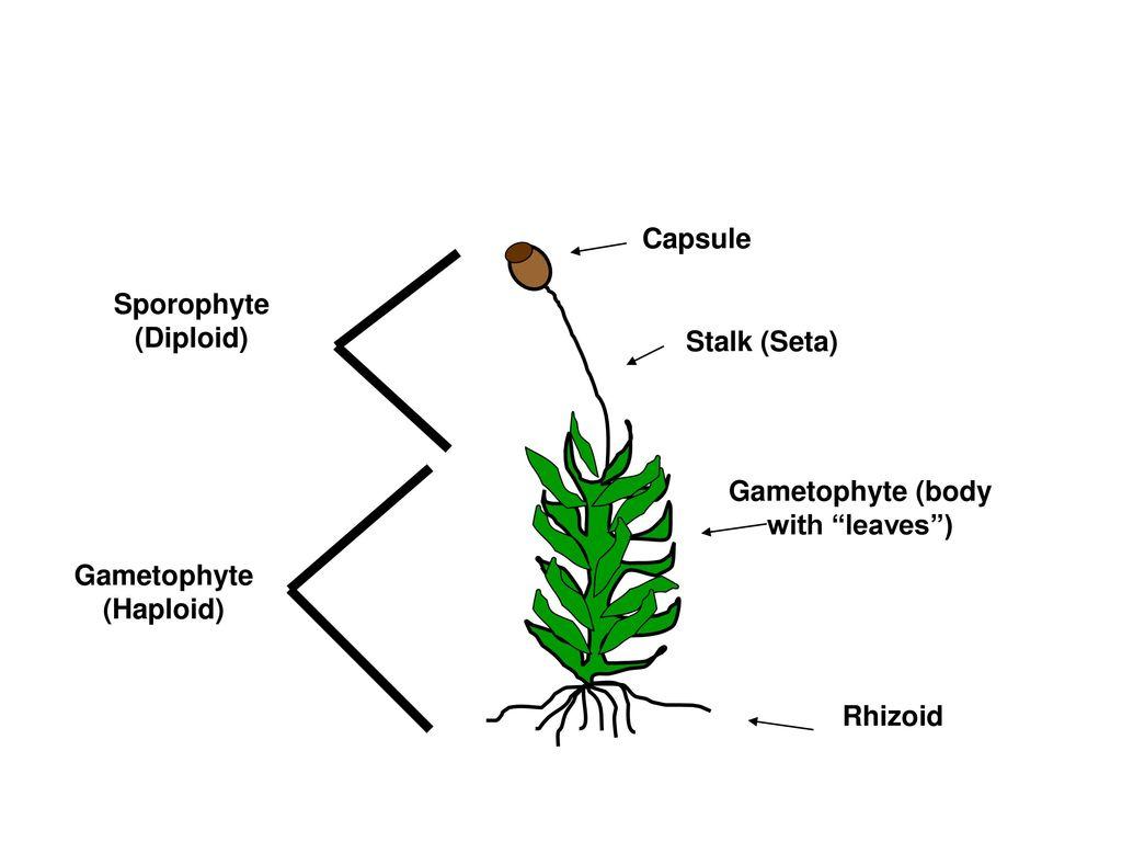 Name Five major characteristics of the Fungi Kingdom