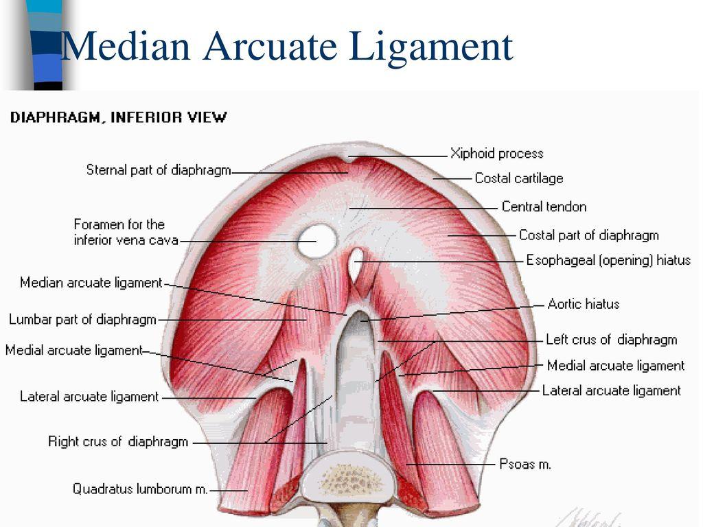 Superior Mesenteric Artery Doppler