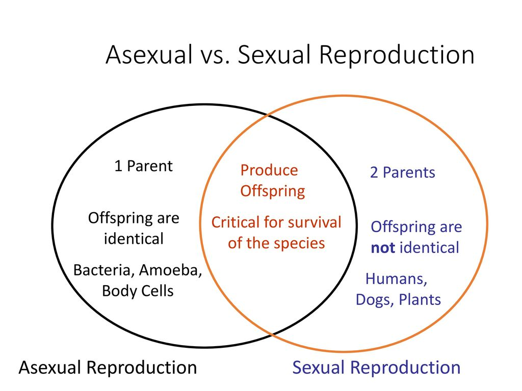 venn diagram sexual and asexual reproduction act 5e digital keypad wiring 21 define