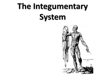Physiology Intro: The Integumentary System Unit 8