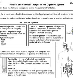 CLASS SET CLASS SET Physical and Chemical Changes in the Digestive System  Reading to Learn: Read the following passage and answer the questions that  follow. - ppt download [ 768 x 1024 Pixel ]