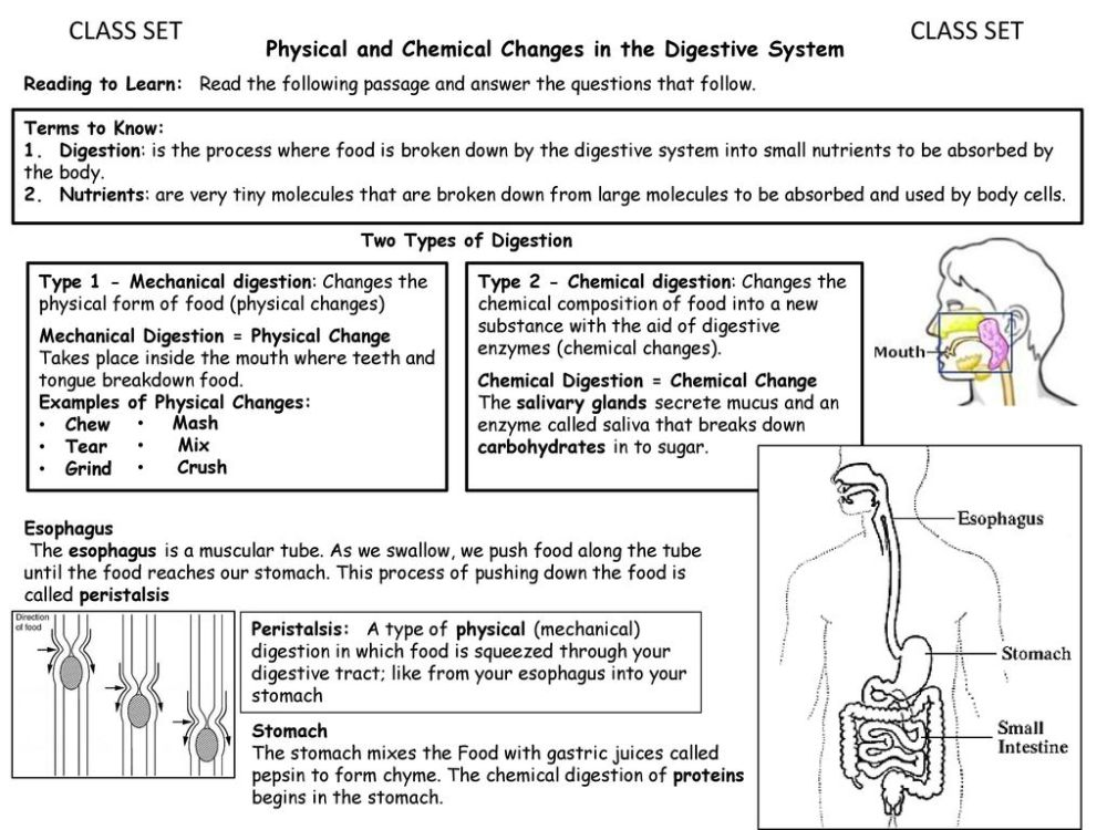 medium resolution of CLASS SET CLASS SET Physical and Chemical Changes in the Digestive System  Reading to Learn: Read the following passage and answer the questions that  follow. - ppt download