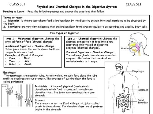 small resolution of CLASS SET CLASS SET Physical and Chemical Changes in the Digestive System  Reading to Learn: Read the following passage and answer the questions that  follow. - ppt download