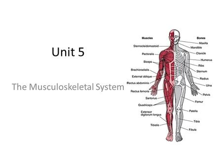 Level 3 BTEC Applied Science Unit 8: Physiology of Human
