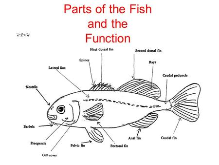 ©Dr. Mitchel Goodkin, Draw and label the parts of a fish