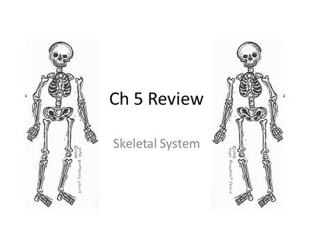 Ch 5 Review Skeletal System. Identify structure A