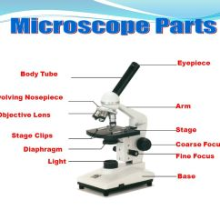 Diagram Of A Microscope And Functions Its Parts Wiring Three Way Light Switch Introduction To The Ppt Video Online Download