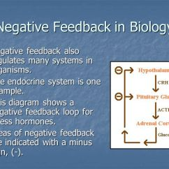Negative Feedback Loop Diagram Led Driver Wiring Partnership For Environmental Education And Rural Health - Ppt Download