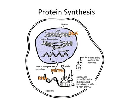 dna translation diagram 2005 toyota 4runner wiring from to protein and viruses bacteria - ppt video online download