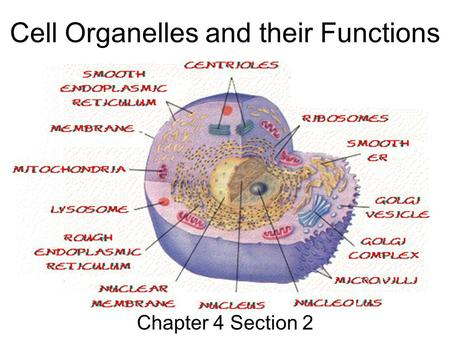 simple animal and plant cell diagram christmas tree light wiring structure boundaries - plasma membrane. ppt download