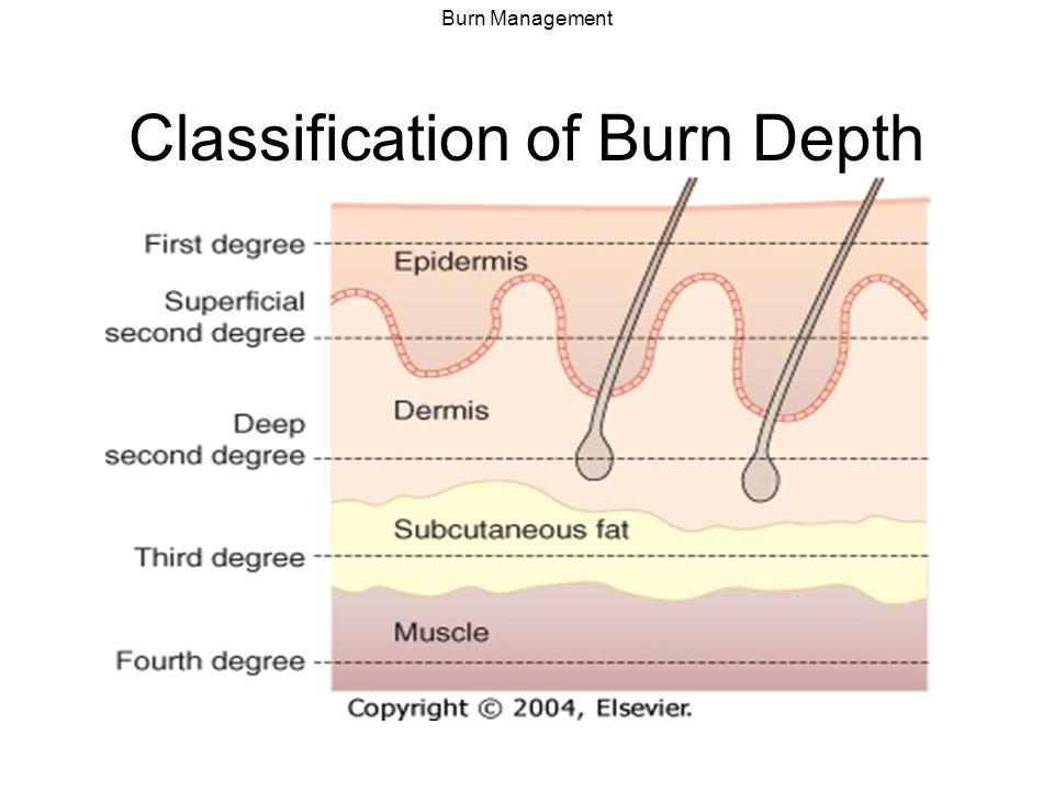 wound assessment diagram legrand rj11 socket wiring burn management kenneth desart. - ppt video online download