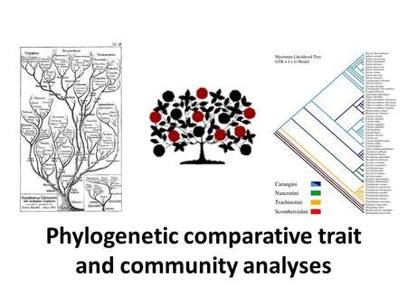 PHYLOGENETIC DIVERSITY Methods and applications Divya B