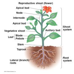 Diagram Of A Flowering Plant With Label Car Bank 1 Structure, Macro. - Ppt Video Online Download