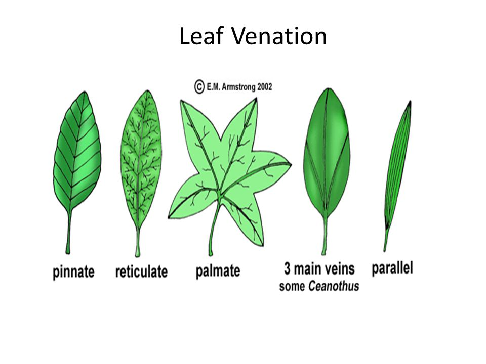 Plant Structure Macro Ppt Video Online Download
