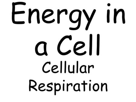 Cellular Respiration. ItemActivities that the item does