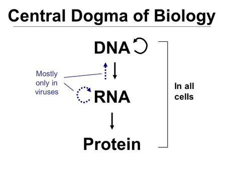 Molecular Biology CHEMICAL AND PHYSICAL PROPERTIES OF DNA