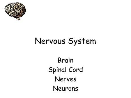 Comparing the Sheep Brain to the Human Brain