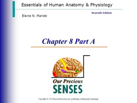 Essentials Of Human Anatomy And Physiology Chapter 8 Notes ...