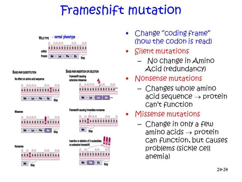 Frameshift Mutation | Frameswalls.org