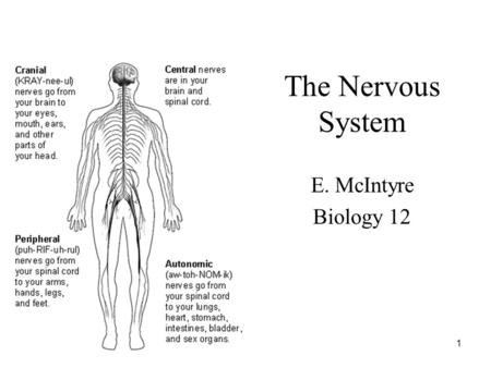 Nervous System Chapter 35. Vocabulary 1. muscle tissue 2