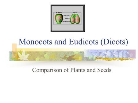 lima bean diagram to label kc daylighter wiring seeds monocotyledon dicotyledon - ppt video online download