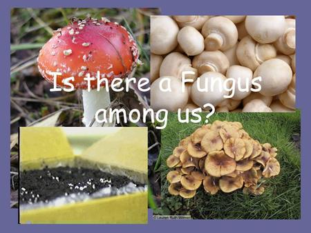 Fungus Chapter ppt video online download