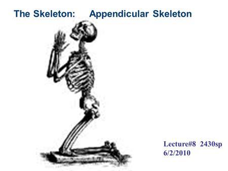 THE BONES OF THE SKELETON Chapter 7. Skeletal System