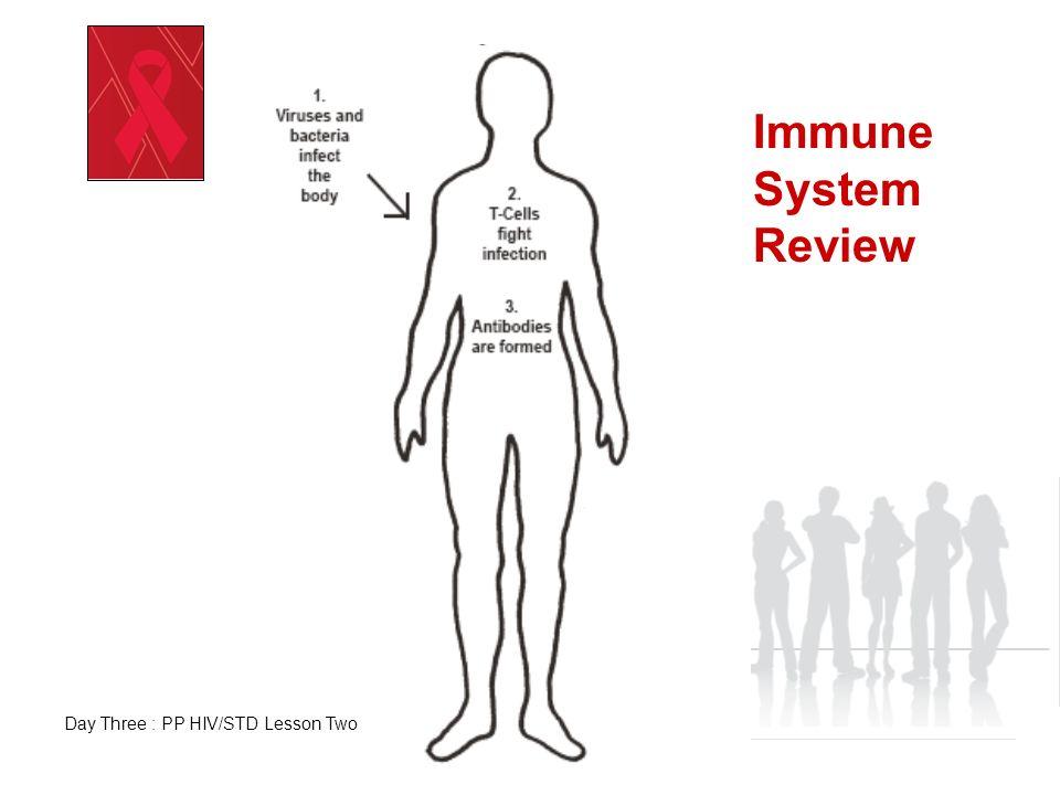 Immune System Worksheet High School. Immune. Best Free