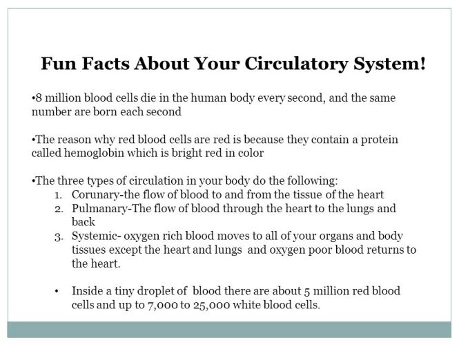 5 Fun Facts About The Circulatory System Best Fact 2017