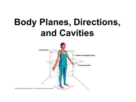 Body Planes, Directions, and Cavities. Basic Terms to Know