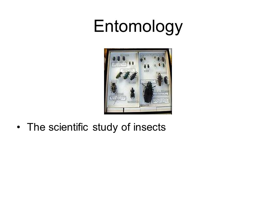Biology Intro Mr. Holden Fall ppt download