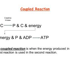 Diagram Of The Atp Molecule 2002 Mazda Protege5 Engine Re-synthesis To Provide Energy. - Ppt Video Online Download