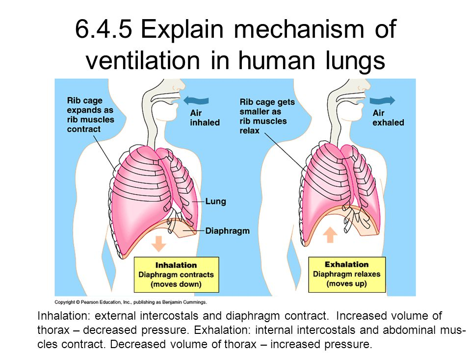 Volume And Lungs Diagram Label