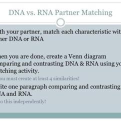 Venn Diagram Comparing Dna And Rna Pioneer Wiring For Car Stereo What Macromolecule Is The Subunit Of Ppt Video Vs Partner Matching