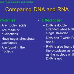 Venn Diagram Comparing Dna And Rna 3 Phase Transformer Wiring Points To Ponder What Are Three Functions Of Dna? - Ppt Video Online Download