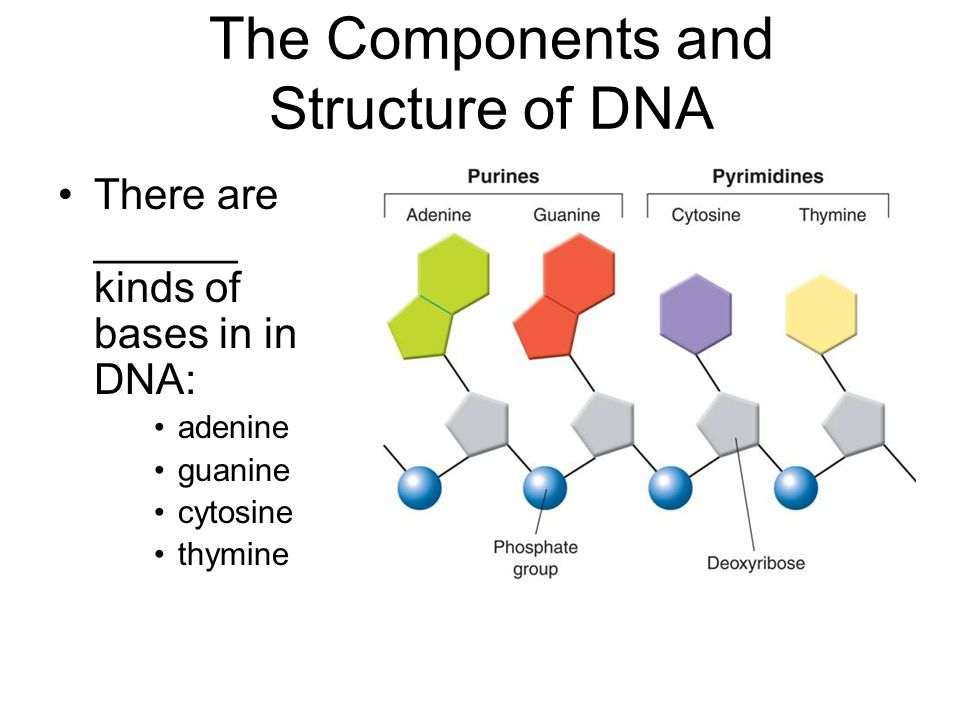 dna translation diagram wiring of split air conditioner vocabulary key terms replication codon intron exon - ppt video online download