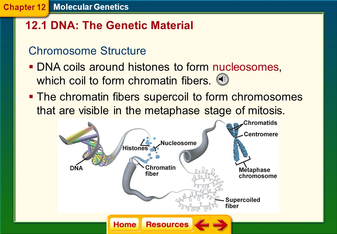 The Structure Of Dna And Replication Worksheet Answers