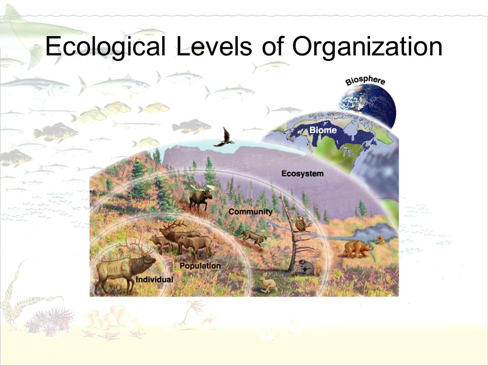 What Is Ecology? Ppt Video Online Download