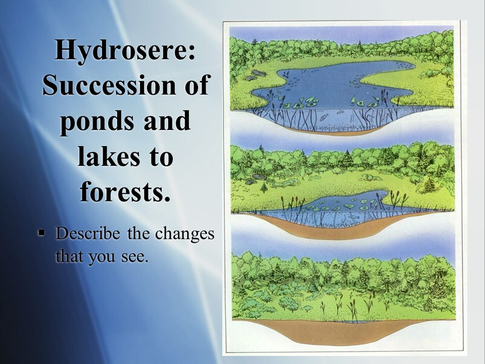 Environmental Systems Ppt Video Online Download