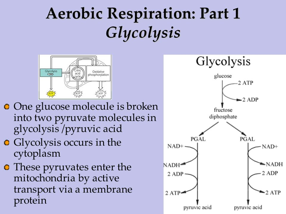 explain krebs cycle with diagram liquid level controller circuit ib biology 3.7 cell respiration. - ppt download