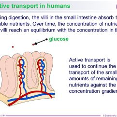 Human Intestines Diagram 5 Pin Rectifier Wiring Boardworks Gcse Additional Science: Biology - Ppt Video Online Download