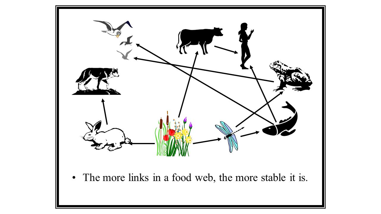 Healthy Ecosystem A healthy ecosystem is composed of