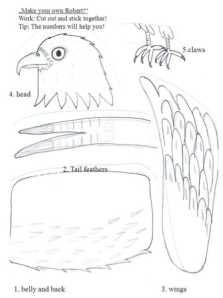 What are the tools of Birds of Prey?. Talons Sharp beak