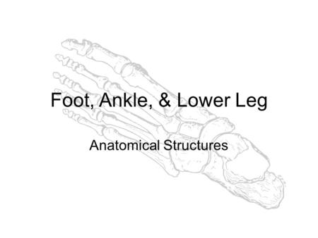 Muscles of the Foot and Lower Leg Mr. Brewer. Movements