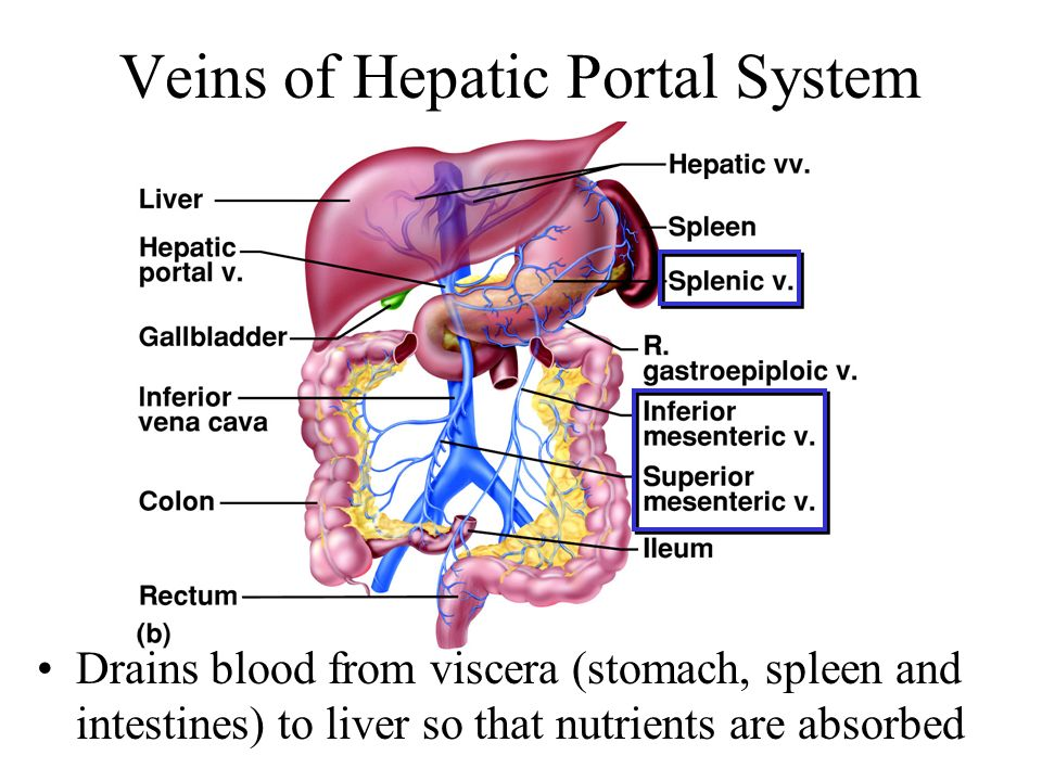 System Pearson Hepatic Portal