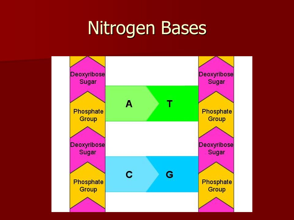 Nitrogen Base Or Two Parts