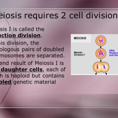 Meiosis Vs Mitosis Diagram Network Cable Wire Why Does Reproduction Require 2 Types Of Cell Division? - Ppt Download